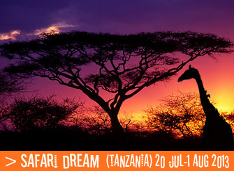 Amazing Safari trip in the plains of East Africa